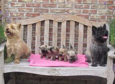 Cairn family photo