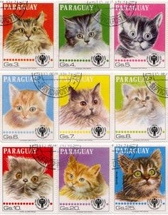 Paraguay, 1979 The bottom left cat is really scary!