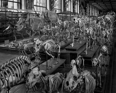 MATTHEW PILLSBURY » Hordes, La Galerie d'Anatomie Comparée, Paris, 2008