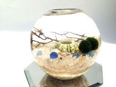 Marimo terrarium live pair of nano marimo moss by EclecticZen, $24.00