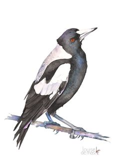 Magpie watercolour painting print, Australian Magpie painting, magpie watercolour, 5 by 7 size, M10816, black bird print