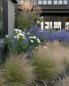 Moondance rose, Russian sage & Mexican feather grass via Le Jardinet Designs. Find an alternative to the invasive feather grass Mexican Feather Grass, Front Yard Design, Xeriscaping, Ornamental Grasses, Garden Cottage, Prairie Garden, Front Yard Landscaping, Landscaping Ideas, Luxury Landscaping