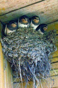 how many times have you seen this? can't open the garage door till they leave, or putting newspaper under the nest on the porch!!