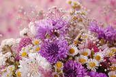 Colección de fotografía - flores k26374879 - Buscar fotos e imágenes y fotos Clip Art - k26374879.jpg