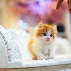 These kittens will completely melt your heart! 💕 Funny Cat Images Video Memes Quotes For Cat Lovers - Emilie Justus - These kittens will completely melt your heart! 💕 Funny Cat Images Video Memes Quotes For Cat Lovers - Kittens Cutest Baby, Cute Cats And Kittens, I Love Cats, Baby Kitty, Kitty Cats, Cute Baby Cats, Orange Kittens, Cutest Babies, Ragdoll Kittens