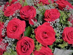 Rose, Flowers, Plants, Valentines Day, Pink, Plant, Roses, Royal Icing Flowers, Flower