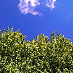 #bluesky #lonelycloud #green