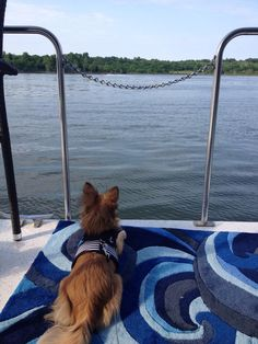 On the lookout for Lake Pirates #westmarine #dogdaysofsummer