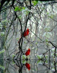 Love the Cardinal red against the green backdrop in this photo.