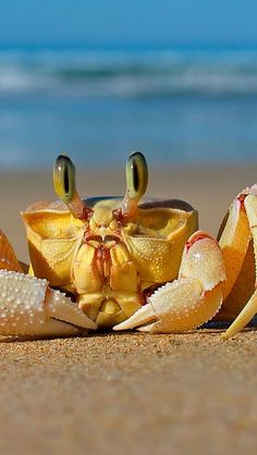 crab on the beach by the sea