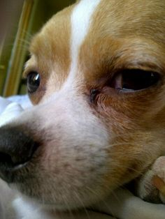 I have my eye on you! My Eyes, Dogs, Animals, Animales, Animaux, Pet Dogs, Doggies, Animal, Dog