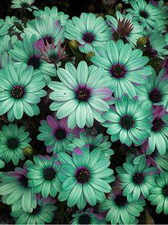 Google Image Result for http://25.media.tumblr.com/tumblr_m7w0ga1edd1ra68cxo1_500.jpg