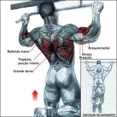 Barra Fixa:   Esse é o exercício mais conhecido para o grupo muscular de costas. No entanto a pegada faz grande diferença. Quando em pronação (figura acima) você tem menos atuação de bíceps braquial e braquial do que na pegada fechada, o que dificulta muito o movimento, portanto se estiver iniciando nas barras comece pela pegada em supinação.