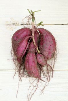 A guide for when to harvest sweet potatoes for each region of the United States. Sweet potatoes need 100-140 days in the ground to mature.