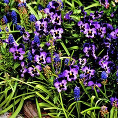 Make a statement in your garden with purple flowers. Find the best purple flowers for you: http://www.bhg.com/gardening/design/color/purple-flower-garden-ideas/?socsrc=bhgpin111313purpleflowers