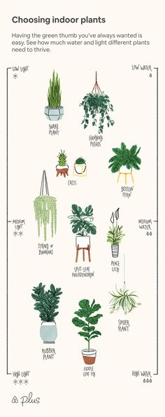 Zimmerpflanzen auswählen Best Picture For big house plants decor For Your Taste You are looking for something, and it is going t Bedroom Plants Decor, House Plants Decor, Plant Decor, Big House Plants, Best Plants For Bedroom, Quanta Luz, Indoor Garden, Indoor Plants, Garden Plants