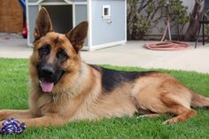 #Dog #Obedience #Training is effective only if you do it the right way. Else, it can even be very stressful for your dog. The way your dog responds to the obedience training very much depends on the way you are carrying out your training.