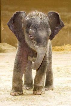 small Elephant brass pin pendant elephants lover zoo African safari b-ele-20