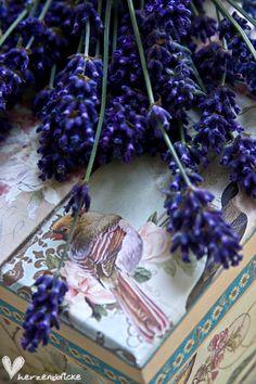 ** Lavender love