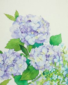 Lovely blossom Lilac,hydrangea and oxy painting process and full shot Watercolor And Ink, Watercolor Flowers, Watercolor Paintings, Green Hydrangea, Hydrangeas, Hydrangea Painting, Decoupage, Daily Drawing, Painting Process