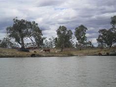Waikerie, Murray River