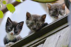 Three Little Kittens Little Kittens, Baby Cats, Kittens Cutest, Cats And Kittens, Cute Cats, Funny Cats, Animals And Pets, Baby Animals, Funny Animals