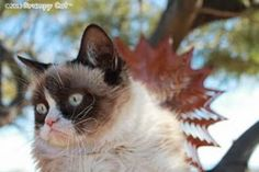 #GrumpyCat #photo For more Grumpy Cat stuff, gifts, and meme visit www.pinterest.com/erikakaisersot