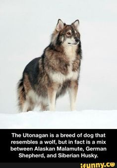 Wouldn't I love to have one