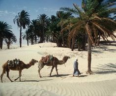 Somewhere in the desert-Tunisia! Loved the country hated my spitting camel.