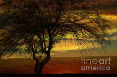 Stunning photo by beverly Guilliams #photography  #deserts #trees #landscape