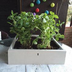 Tu mini huerto con un cajón o gaveta reciclada: Reciclar la gaveta o cajón: efecto final