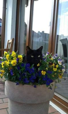 Photo whatz you meanz get outz your flowerzzz wooman? I Love Cats, Cute Cats, Funny Cats, Crazy Cat Lady, Crazy Cats, Kittens Cutest, Cats And Kittens, Animals And Pets, Cute Animals