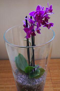 Orquídea mariposa mini plantada en gel dentro de jarrón de cristal   Aprender manualidades es facilisimo.com