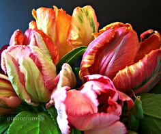parrot tulip - Google Search