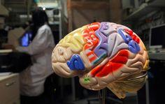 Entscheidet unser Gehirn unbewusst, ist der freie Wille eine Illusion? Nach Jahrzehnten haben Berliner Hirnforscher die berühmte These mit einem raffinierten Spiel gegen den Computer widerlegt.
