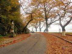 Ioannina, Epirus Hellas Country Roads