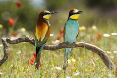United Colors Photo by Felipe Barata Moreno — National Geographic Your Shot
