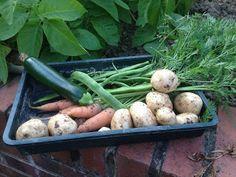 A Retirement Blog: A Garden Permaculture