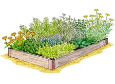 Planting Herbs: Grow a Kitchen Herb Garden