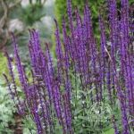 1Top 10 Perennials of the 21st Century