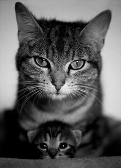Mess with my grandchild and it won't turn out well for you. Believe.""