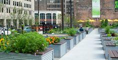 Veg garden // Kenneth Weikel