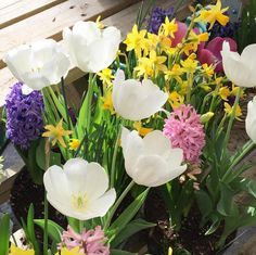 Pretty Spring flowers!