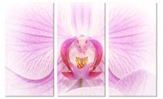 Drieluik canvas schilderij roze orchidee.