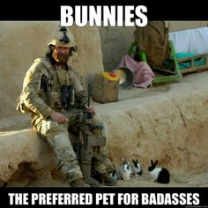 rabbits are actually used as therapy pets for soldiers :)