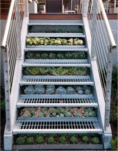 succulents under stairs