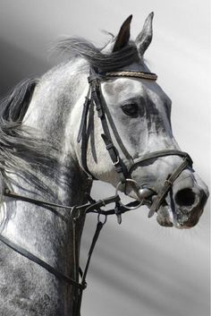 I really want to start riding horses again, and maybe someday have one or two of my own.