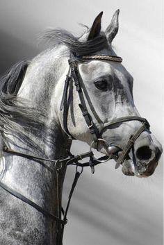 I really want to start riding horses again