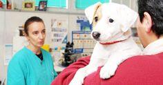 A Mosca vogliono organizzare la Giornata del donatore degli animali