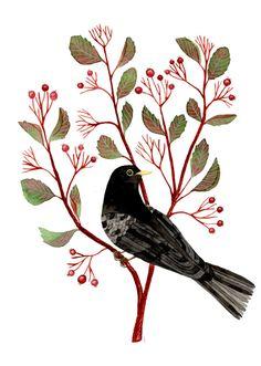Amsel Berrie Zweig - Blackbird, Aquarell, Grafik, print, Kunst, botanische Kunst, Vogelkunst Vogel Aquarell, 8 x 8 Zoll